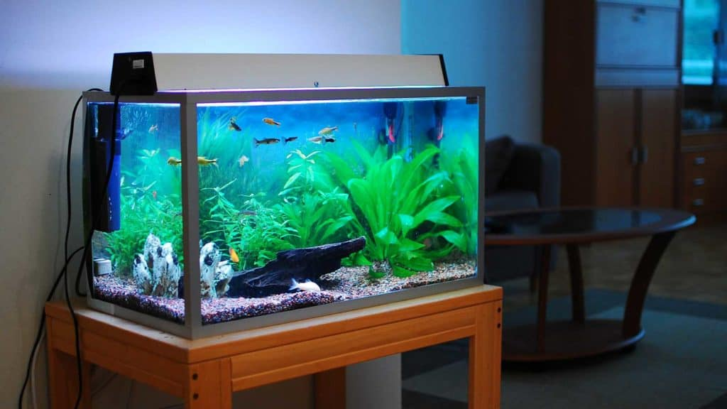 home aquarium pumps